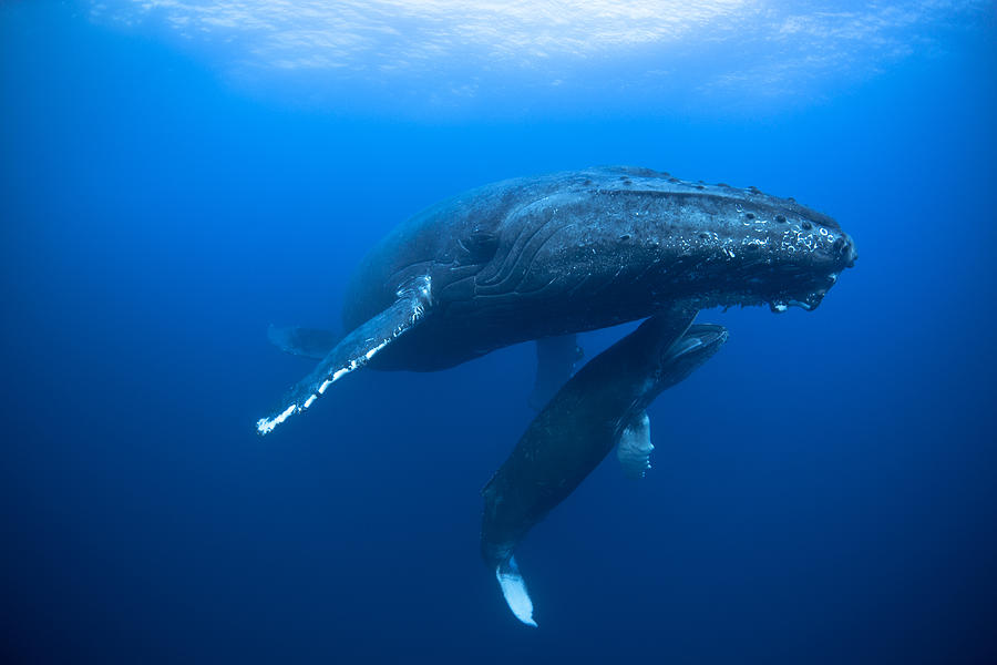 татуировки подковы самое лучшее фото с китом на журнале свернутое