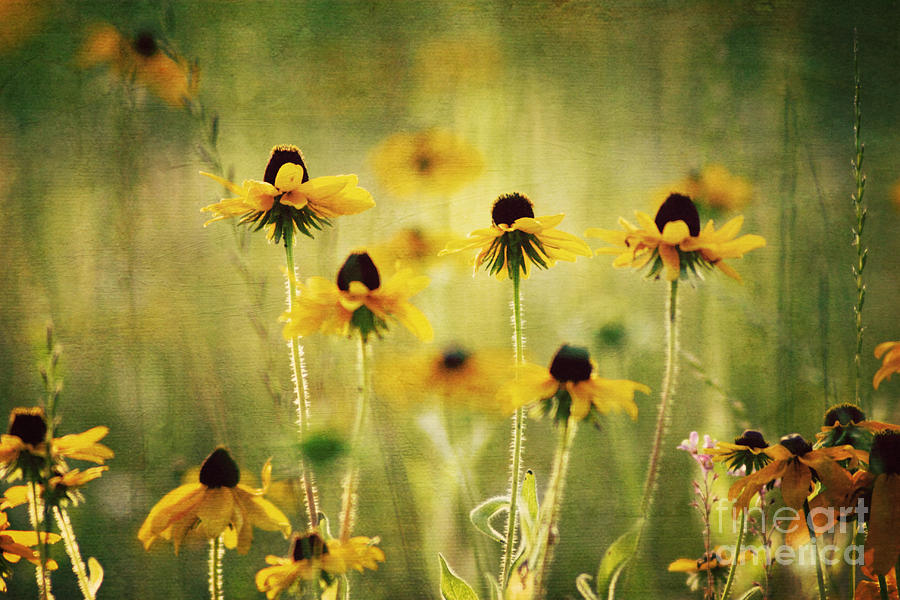 Flower Photograph - Happiness by Joan McCool
