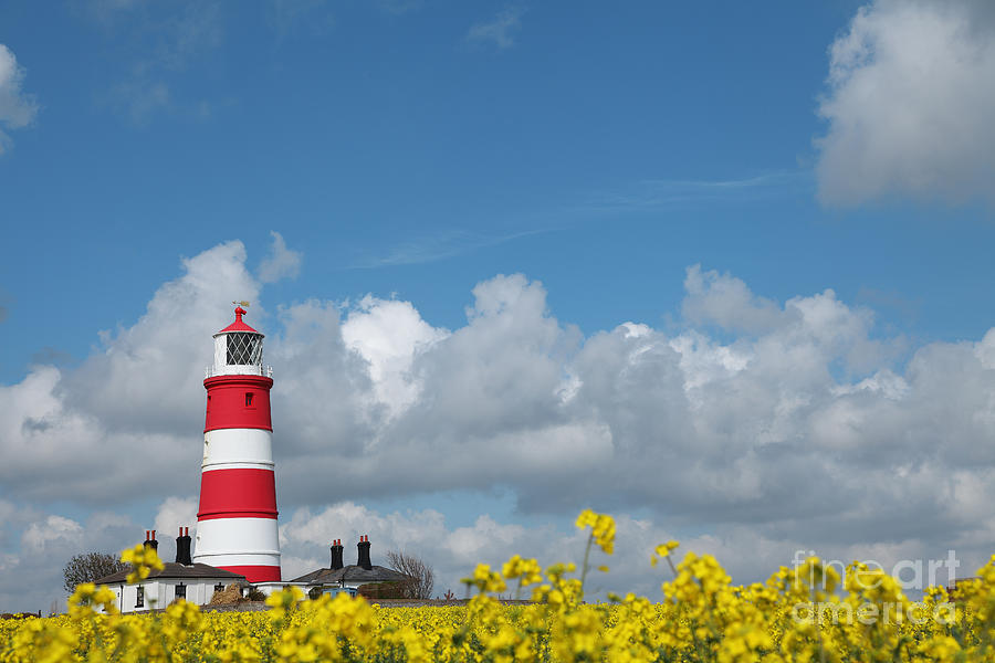 Happisburgh Photograph - Happisburgh Lighthouse With Oil Seed Rape In Flower by Paul Lilley