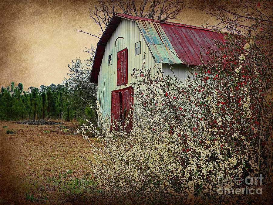 Barn Photograph - Happy Barn In Spring by Lorraine Heath