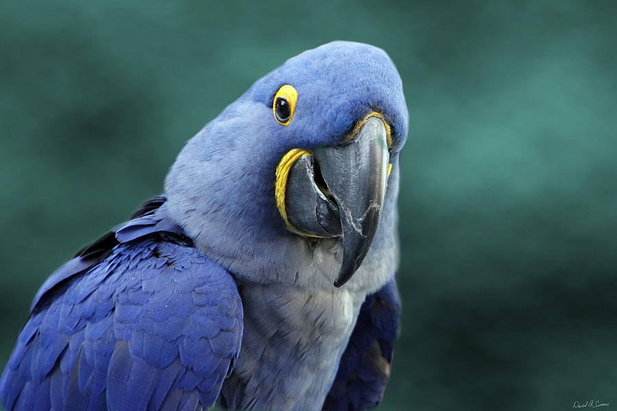 Blue Photograph - Happy Bird by David Simons
