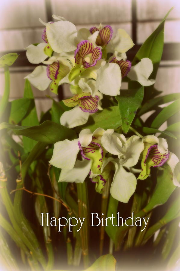 Happy Birthday Orchid Bouquet Photograph by Linda Covino