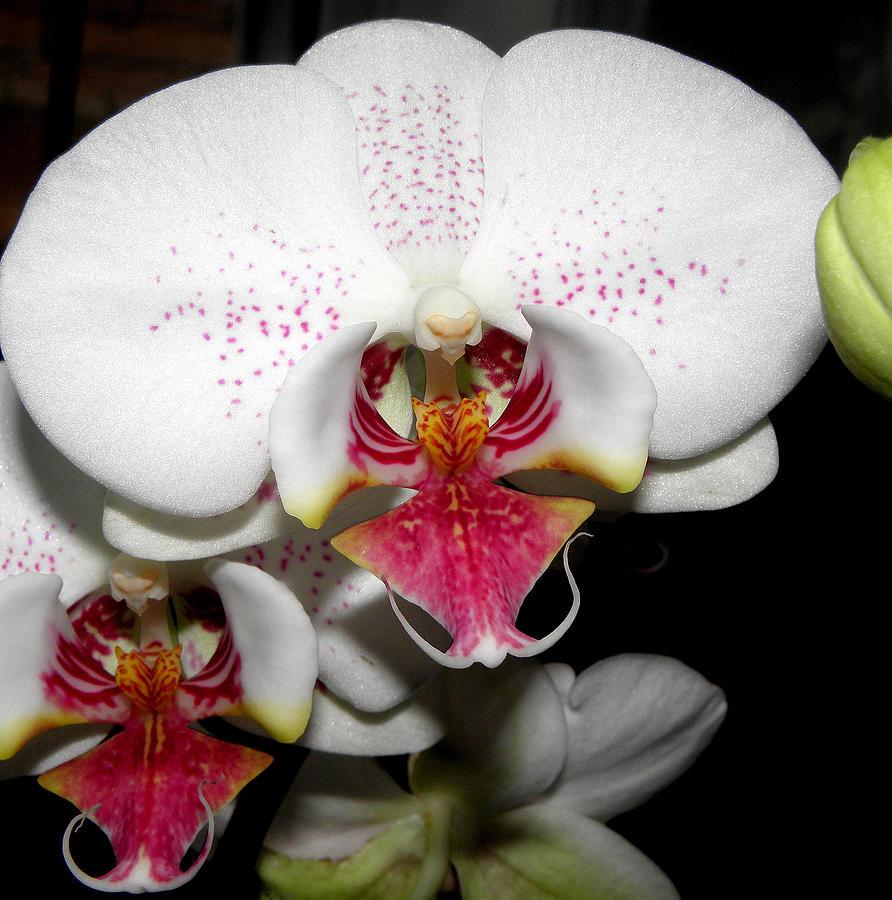 Orchid Photograph - Happy Blooms by Kim Galluzzo Wozniak