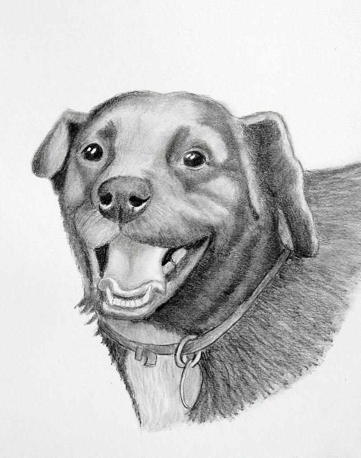 Happy Drawing - Happy Dawg by Lorraine Foster
