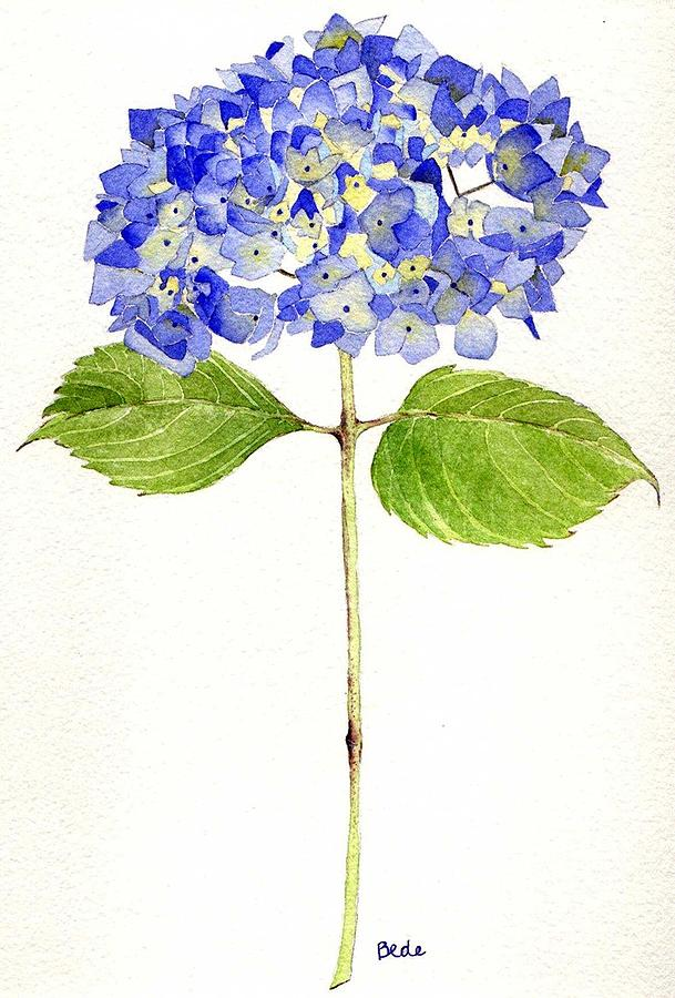 Hydrangea Painting - Happy Day by Catherine Bede