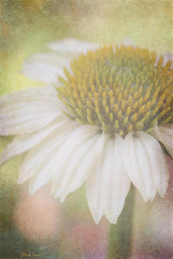 Echinacea Photograph - Happy Days by Heidi Smith