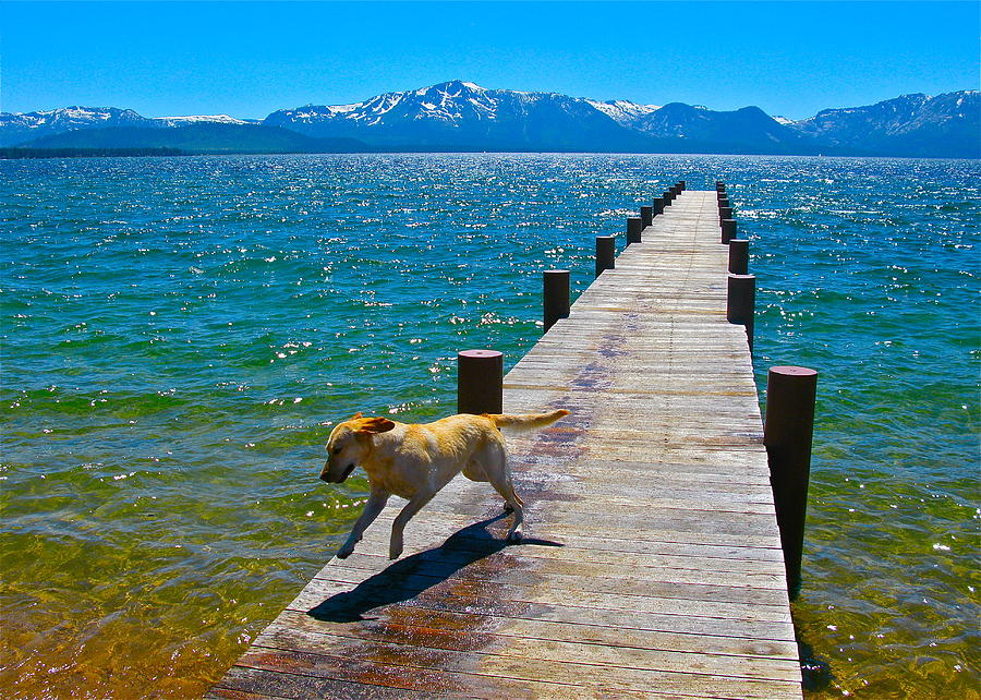 Nature Photograph - Happy Dog by Michael Blesius