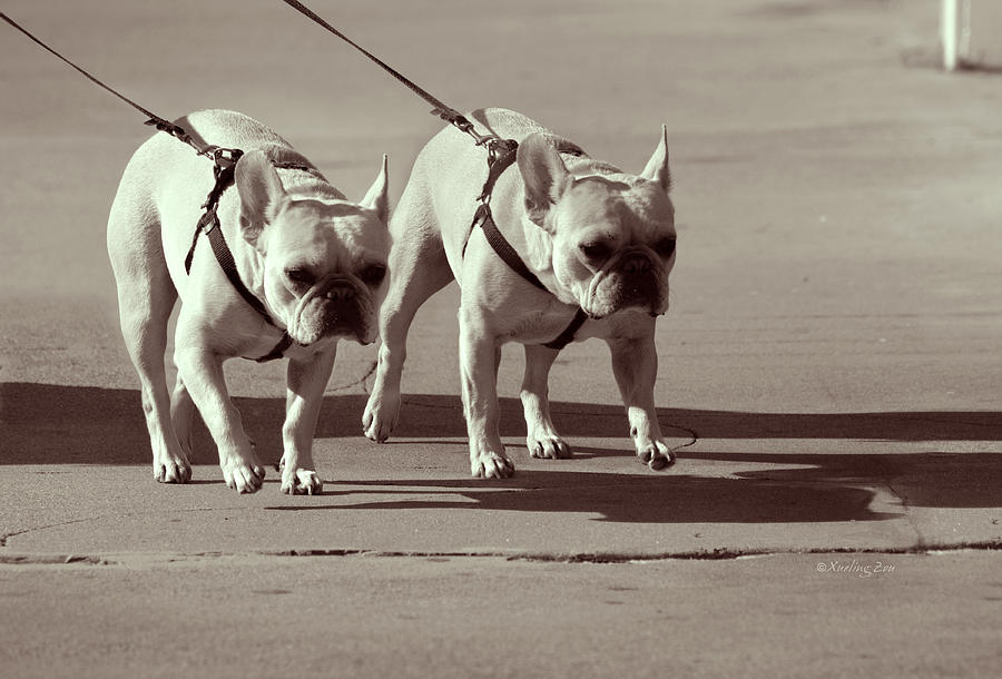 Dogs Photograph - Happy Dogs 14 by Xueling Zou