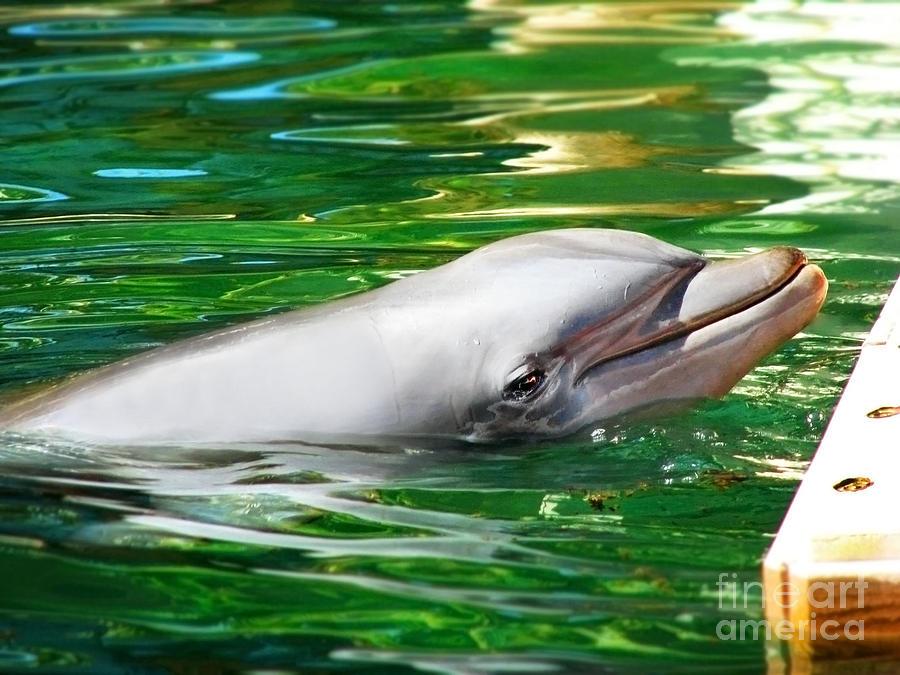 Happy Dolphin Photograph