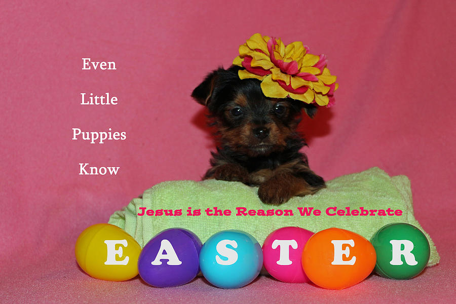 Easter Photograph - Happy Easter by Lorna Rogers Photography