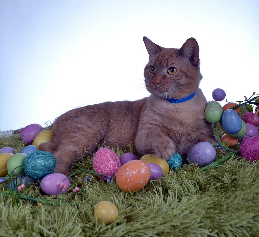 Cat Photograph - Happy Easter by Michael Sokalski