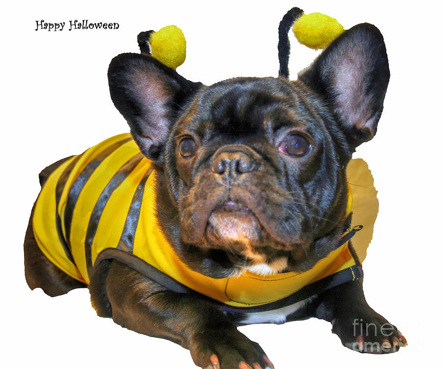 Frenchies Photograph - Happy Halloween Card by Tap On Photo