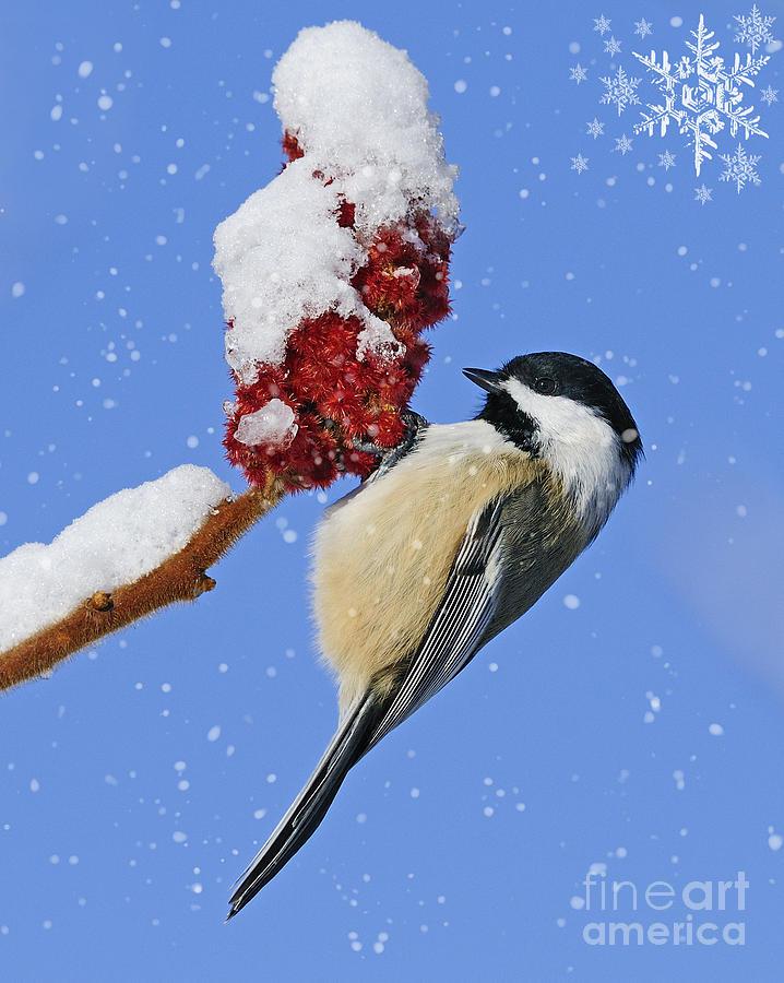 Holiday Photograph - Happy Holidays... by Nina Stavlund