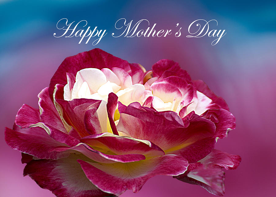 Happy Mother's Day Red Pink White Rose Photograph by ...