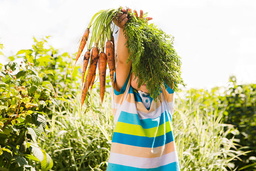 Happy smiling kid boy holding organic carrots outdoors of farm. Boy having fun with  gardening  and helping Photograph by Ulza