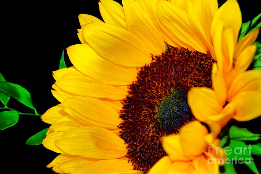 Happy Photograph - Happy Sunflower by Mariola Bitner