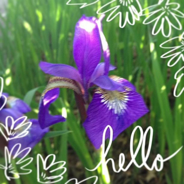 Iris Photograph - Happy Thursday! #abeautifulmess #flower by Teresa Mucha