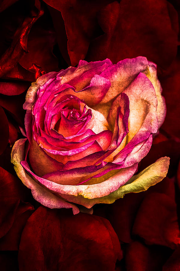 Flower Photograph - Happy Valentines Day - 1 by Alexander Senin
