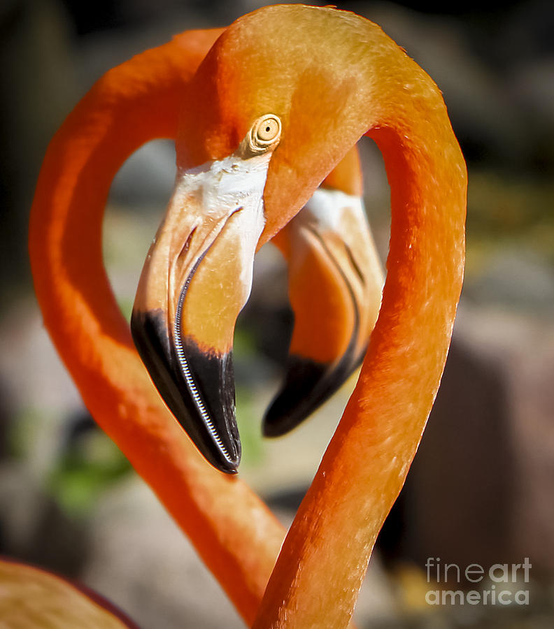 Canon Photograph - Happy Valentines Day by Ricky L Jones