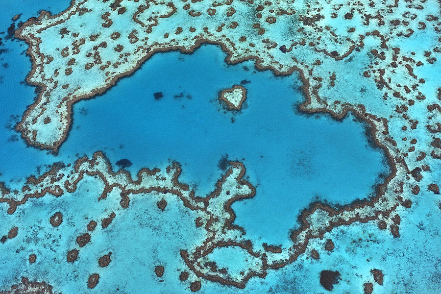 Hardy Reef On Great Barrier Reef Photograph by Ingo Arndt