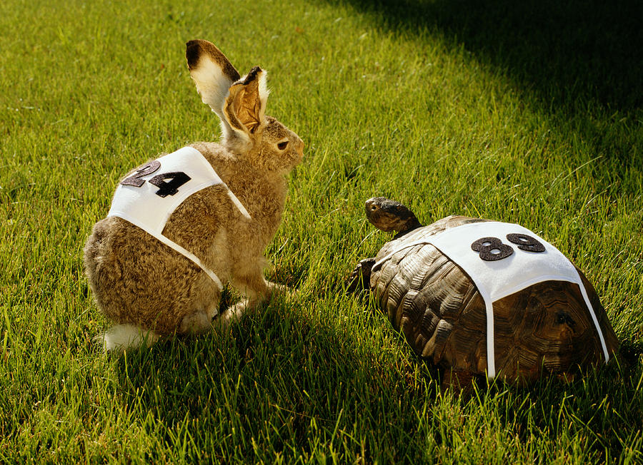 Hare & Tortoise With Race Numbers On Grass Photograph by GK Hart/Vikki Hart