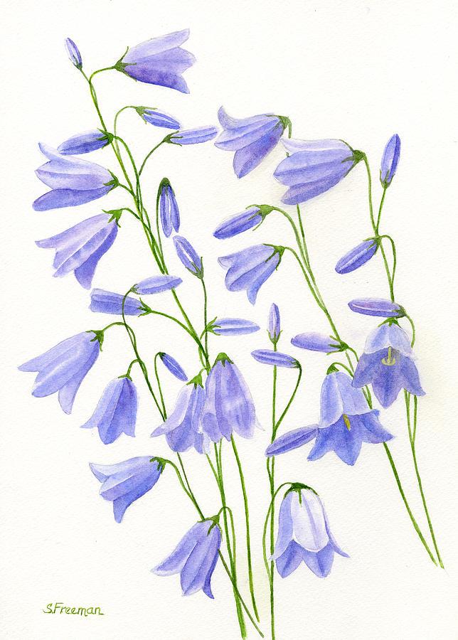 Watercolor Painting - Harebells by Sharon Freeman