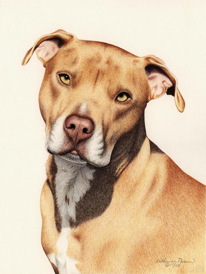 Dog Drawing - Harley by Katherine Plumer