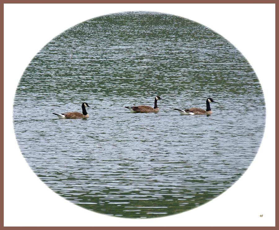 Wild Birds Photograph - Harmonious Canada Geese by Will Borden