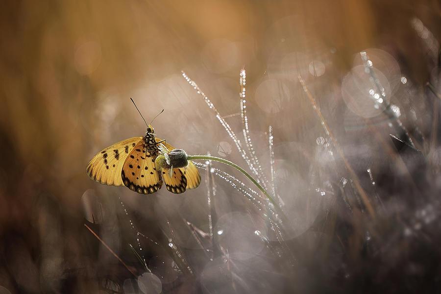 Butterfly Photograph - Harmony by Ahmad Baihaki