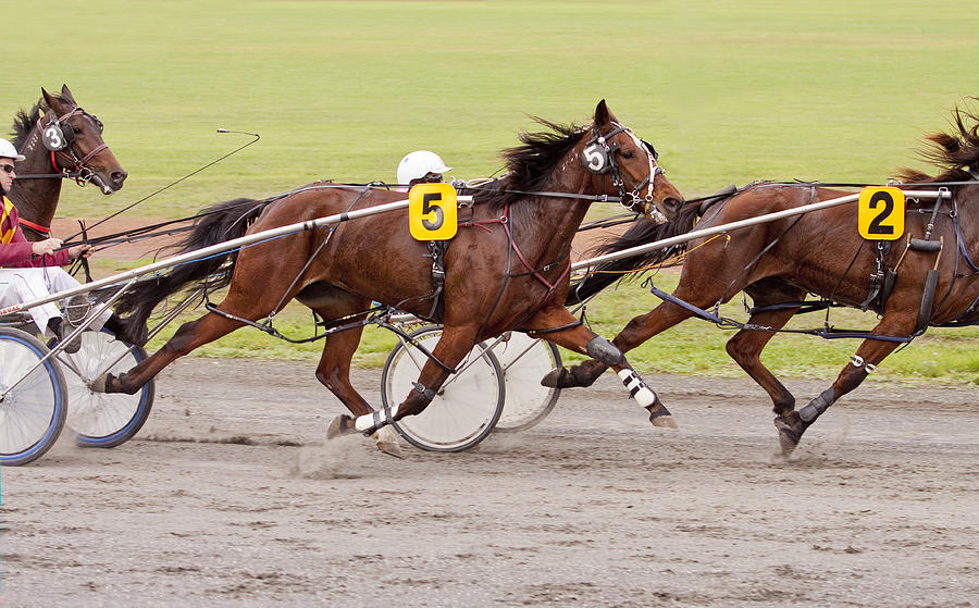 Harness Photograph - Harness Racing by Michelle Wrighton