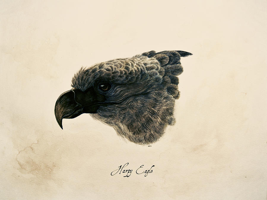 Eagle Painting - Harpy Eagle by Rachel Root