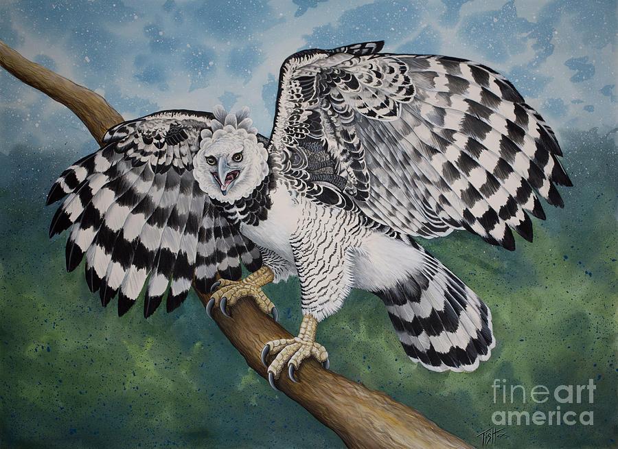 Harpy Eagle by Tish Wynne