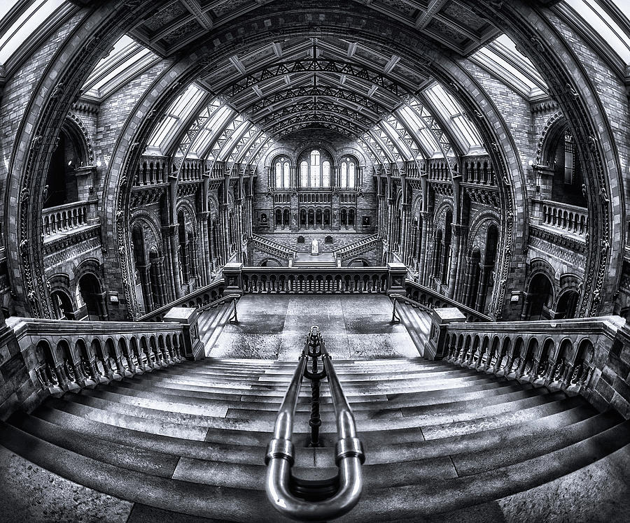 Bw Photograph - Harry Potter Meets Escher And Darwin. by Massimo Cuomo