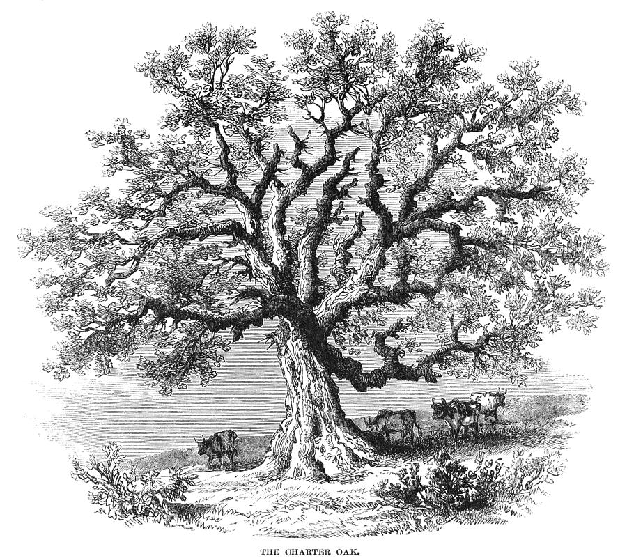 Hartford Charter Oak Painting By Granger