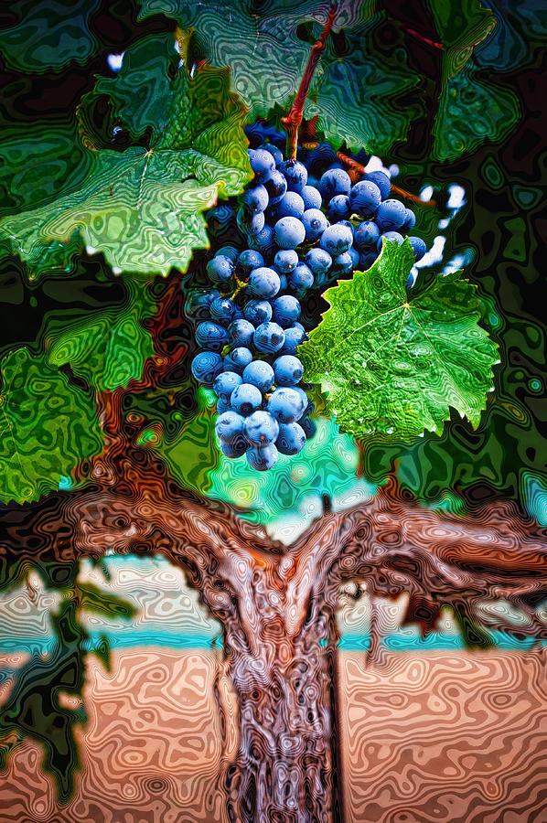 Vines Photograph - Harvest Details by Kristine Ellison