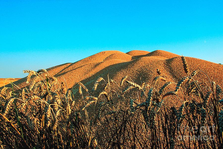Harvest 2 Photograph