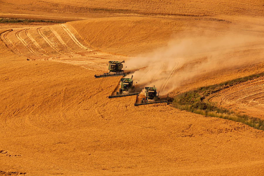 Harvest Photograph - Harvest by Mary Jo Allen