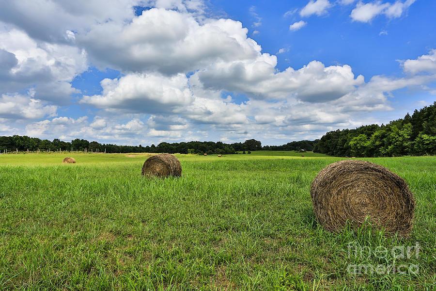 Harvest Photograph - Harvest by Mina Isaac