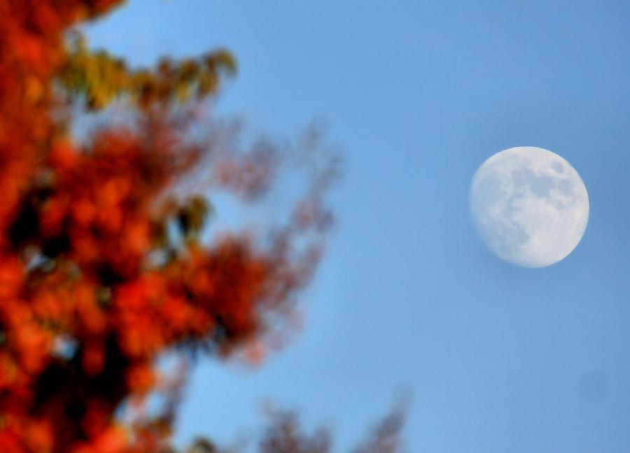 Moon Photograph - Harvest Moon by Karen Scovill