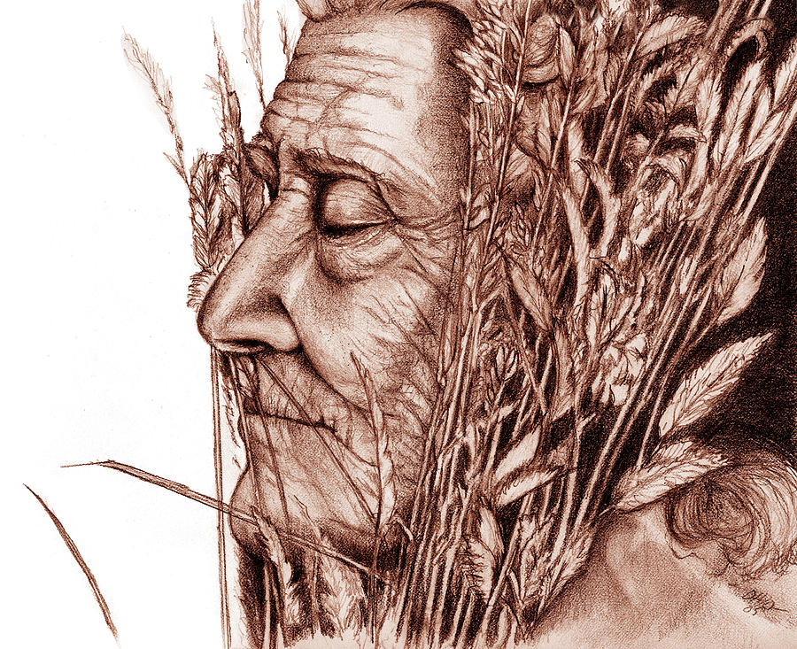 Harvest Drawing - Harvest by Penny Collins