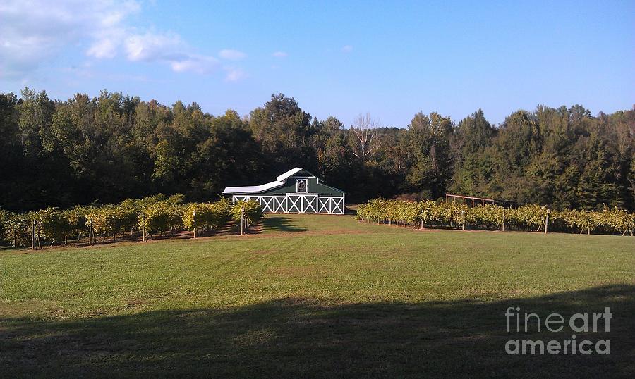 Vineyard Photograph - Harvest Season by Gayle Melges