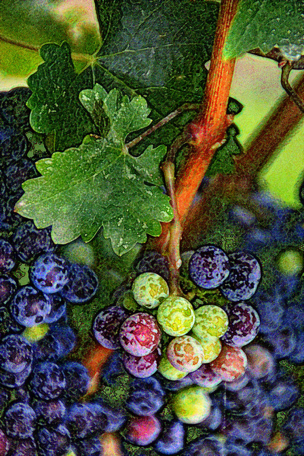 Vineyards Photograph - Harvest Time 1 by Karen  W Meyer