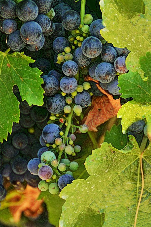 Vineyards Photograph - Harvest Time 2 by Karen  W Meyer