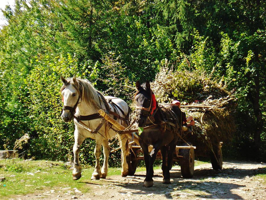 Horse Photograph - Harvest Time by Alison Richardson-Douglas
