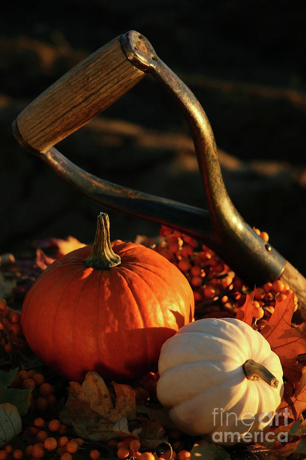 Autumn Photograph - Harvesting For Thanksgiving by Sandra Cunningham