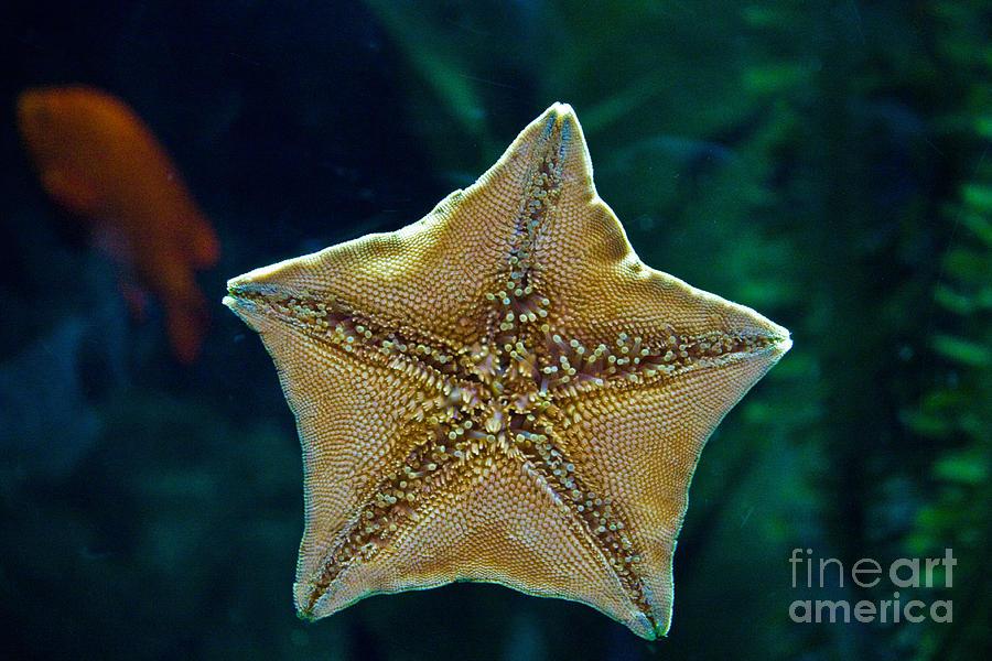 Star Fish Photograph - Has Anyone Seen Nemo by Bob McGill