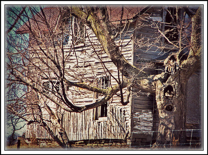 Abandoned Empty Forgotten Lonely Sad Memories Scarey Haunted House Twisted Trees Old Delapitated Dangerous Eery Wornout  Digital Art - Haunted House by Donna Brown