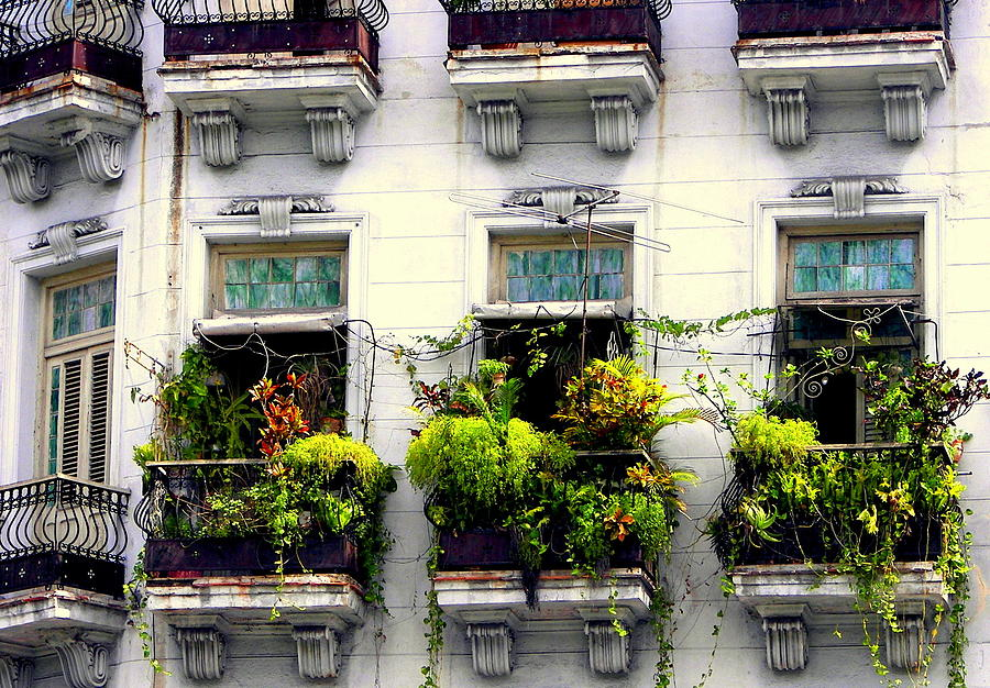 Cuban Architecture Photograph - Havana Windows by Karen Wiles