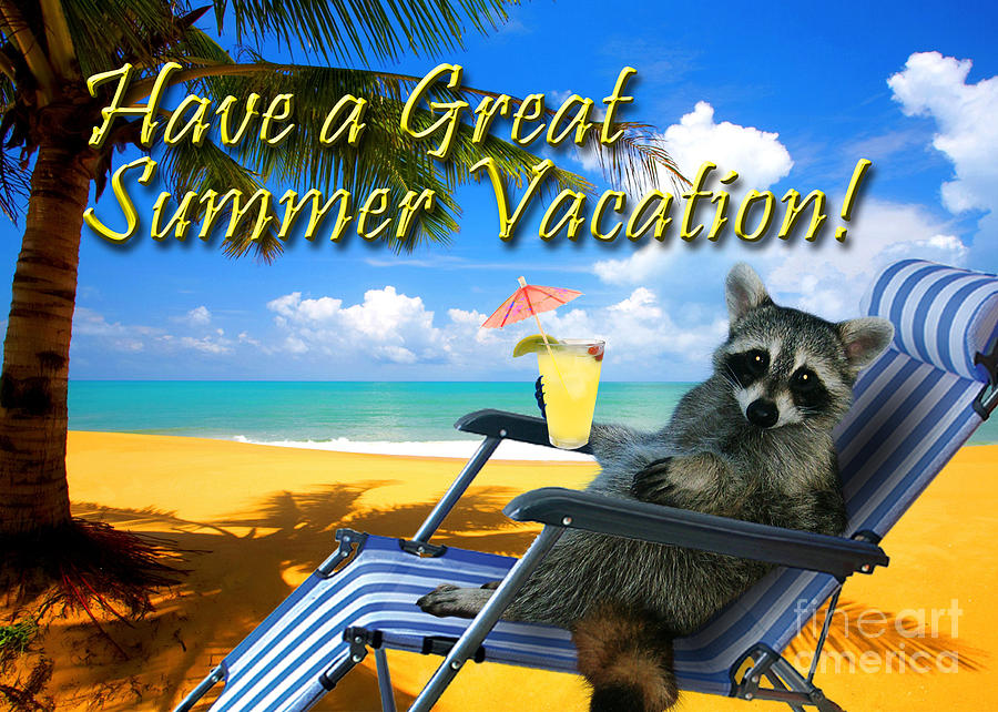 Have A Great Summer Vacation Raccoon Photograph By Jeanette K