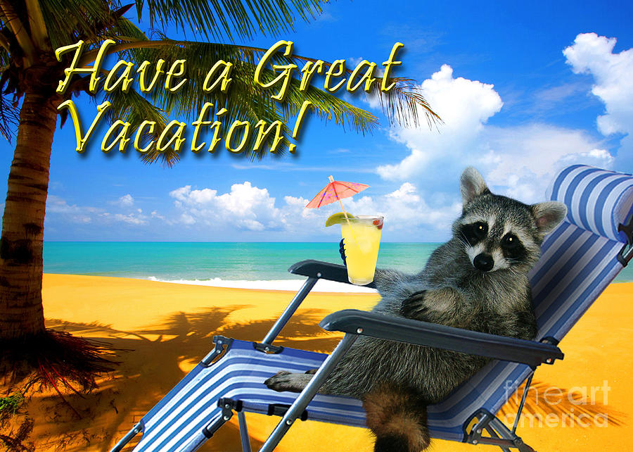 Have A Great Vacation Raccoon Photograph By Jeanette K